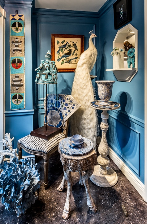 taxidermied albino peacock in blue room at Creel and Gow