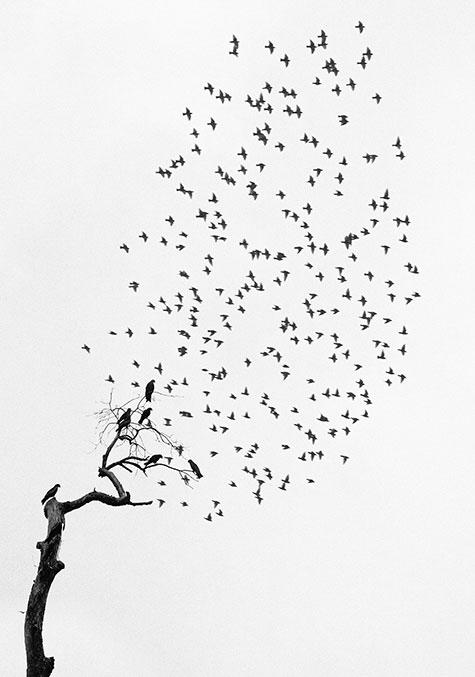 Delhi, India (Flock of Birds), 1999, by Pentti Sammallahti